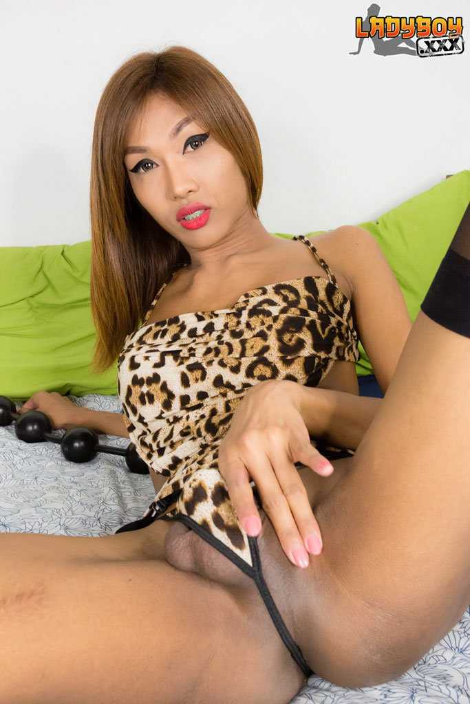 beautiful ladyboy